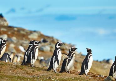 isla Magdalena Pingüinos