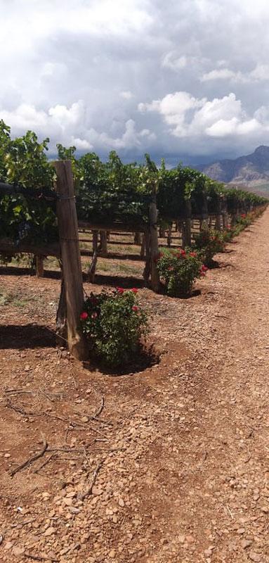 viñedos Chihuahua vinos