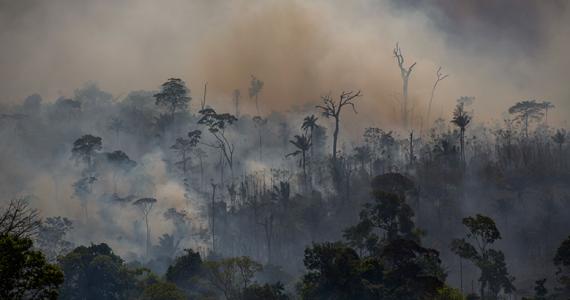 Amazonía Incendios niños