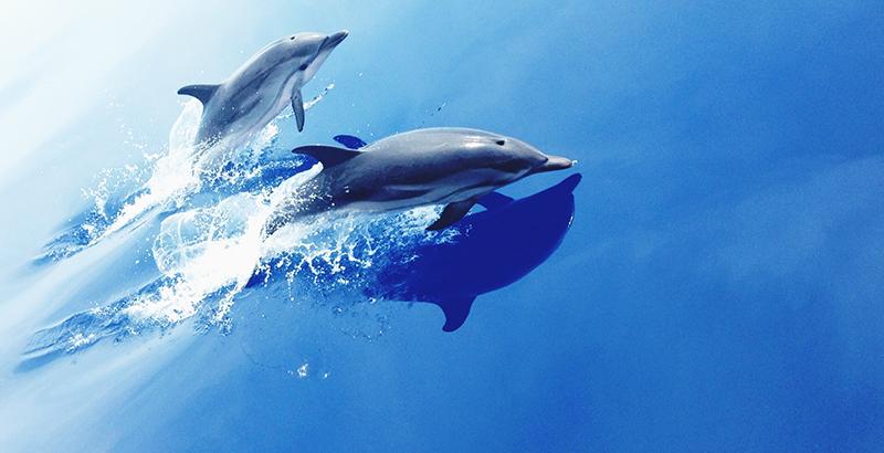 delfines CIA animales espías