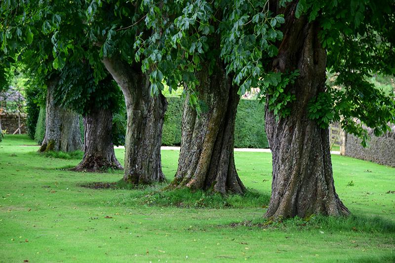 árboles endémicos de Europa