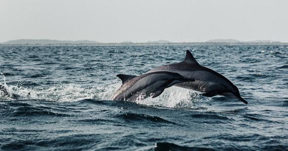 delfines Cabo Verde