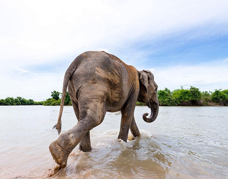 elefantes cascada Tailandia
