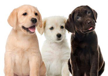 perro perros personalidad