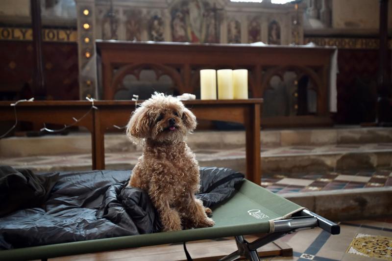 perros vieja iglesia
