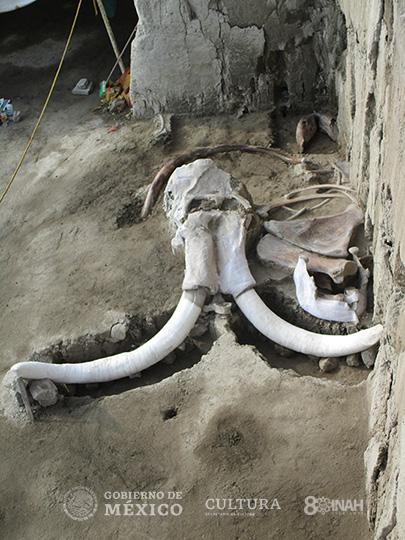 Restos óseos de mamuts