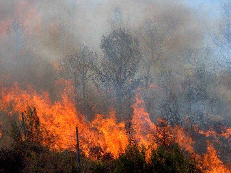 Australia incendios forestales