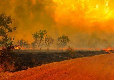 incendio koala Australia