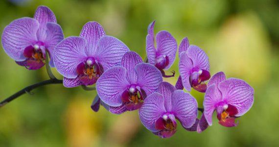 orquídeas Colombia