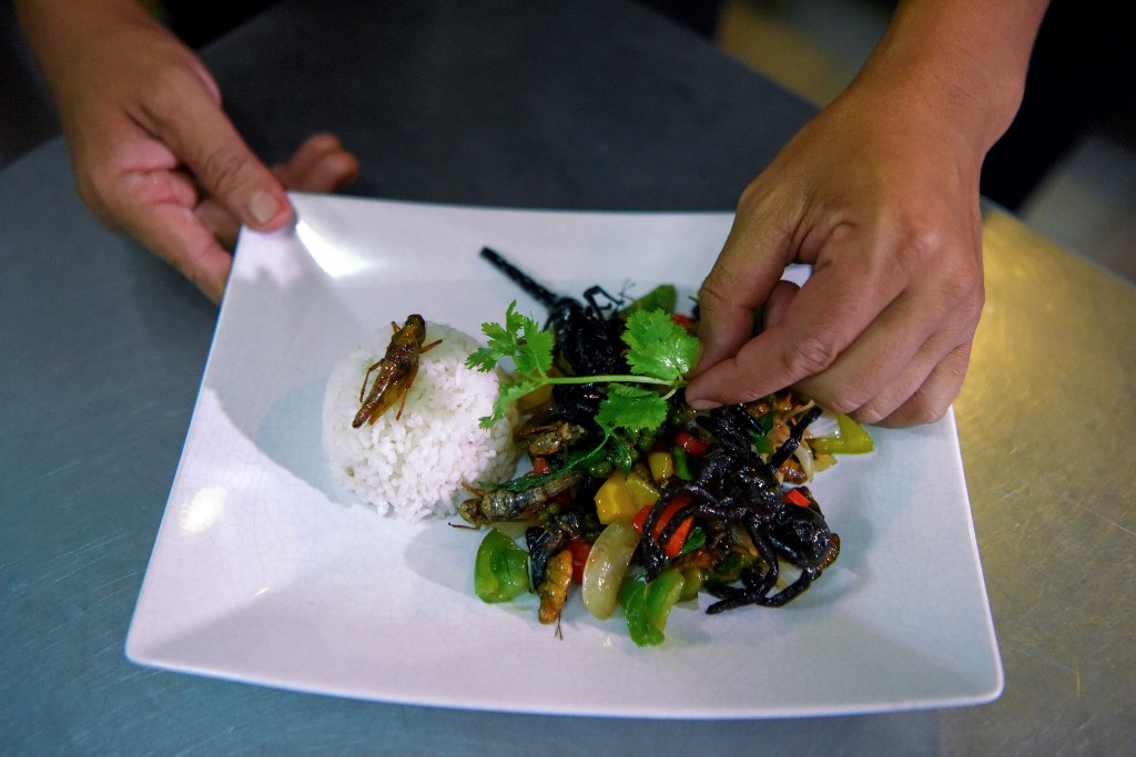 insectos Bugs Café Camboya