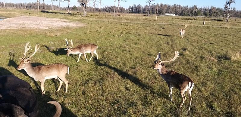 Safari Florida