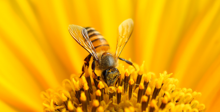 abejas pesticidas