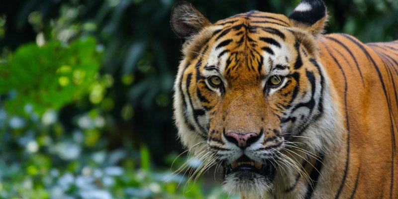 Premier betting tz mega mix los tigres orphelins roulette betting