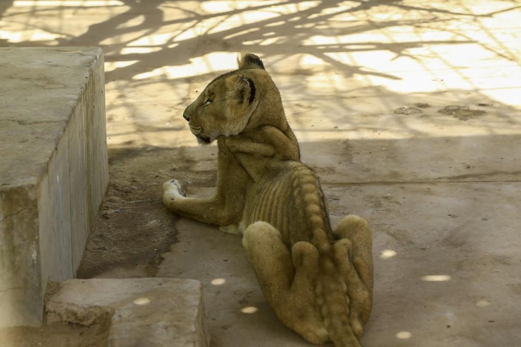 leona parque África Sudán