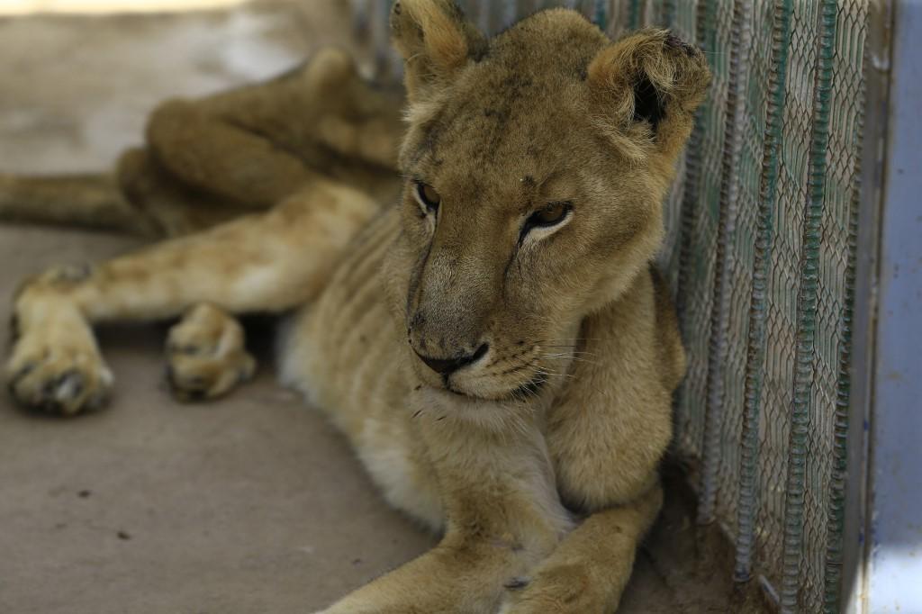leones sudán