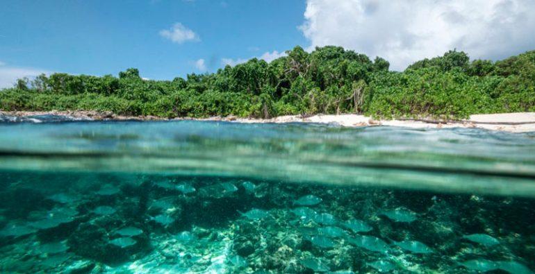 isla de Cousin las Seychelles