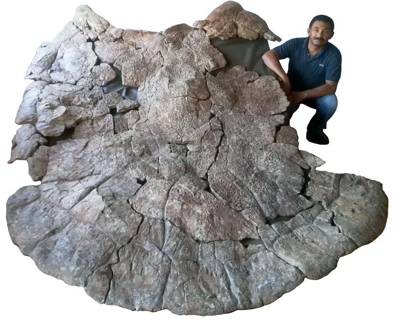 Tortuga Gigante con cuernos