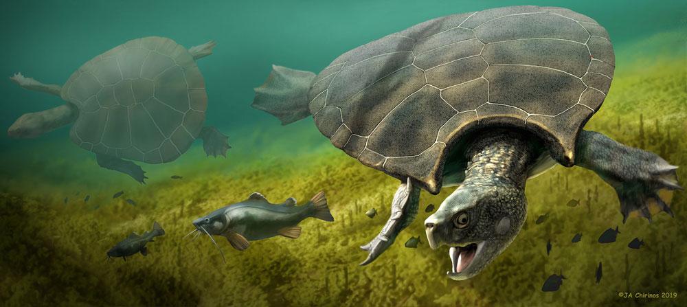 tortuga gigante cuernos