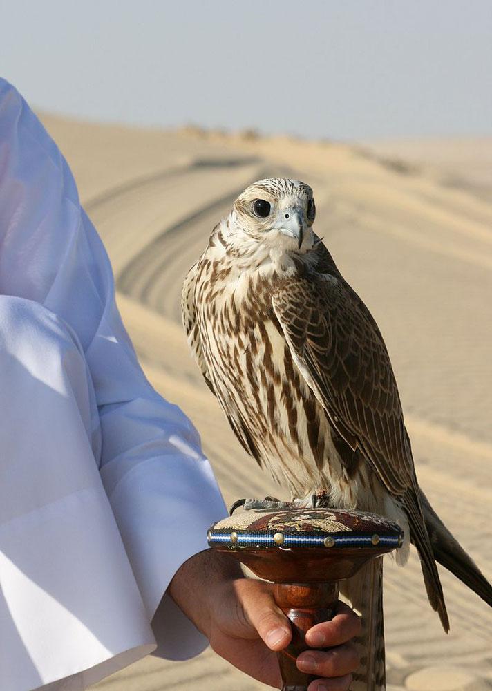 halcón Emiratos Árabes Unidos