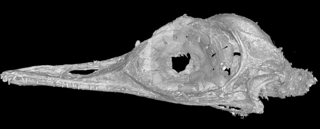 cráneo dinosaurio más pequeño