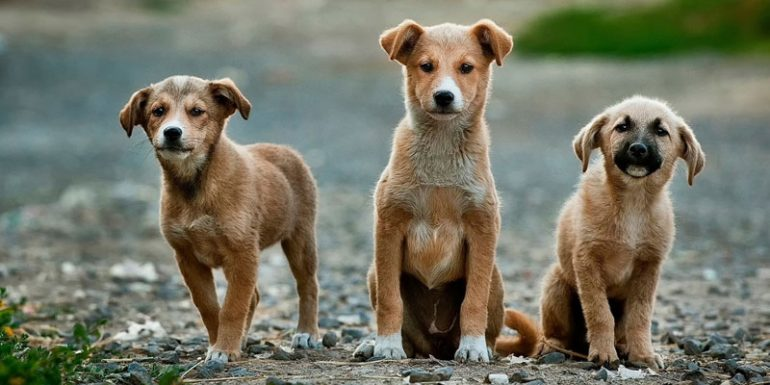 perros cloro hidrogel