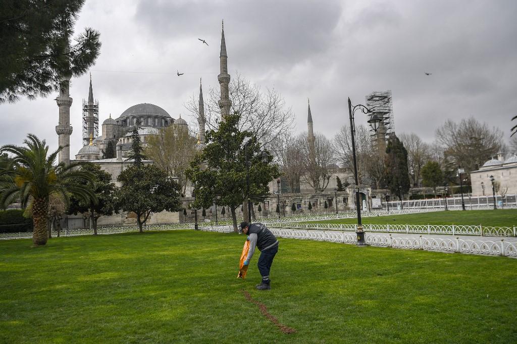 Gatos Calle Estambul Turquía animales