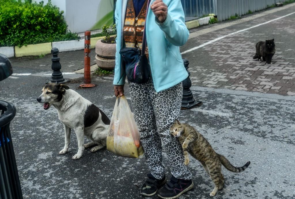 perros gatos callejeros Estambul Turquía alimento