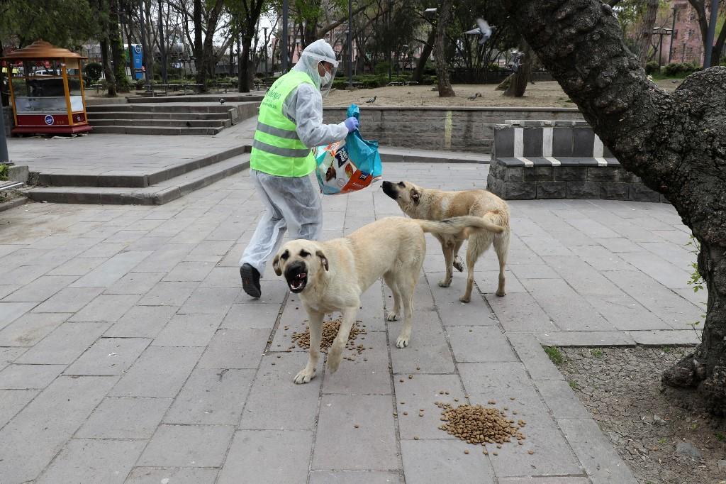 perros Callejeros Anakara alimento animales