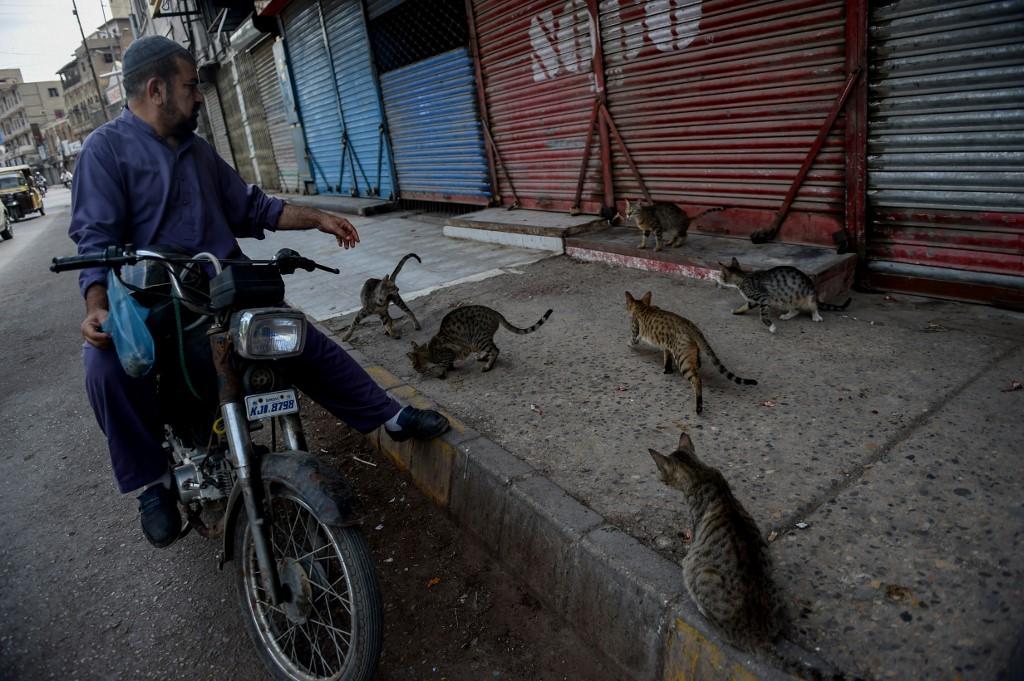 gatos callejeros pandemia Pakistán animales