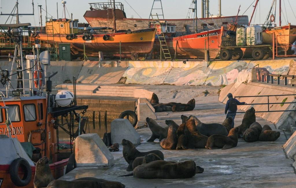 leones marinos Mar del Plata Argentina coronavirus