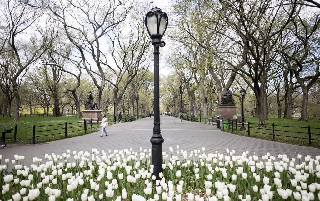 Nueva York Flores Manhattan Parque