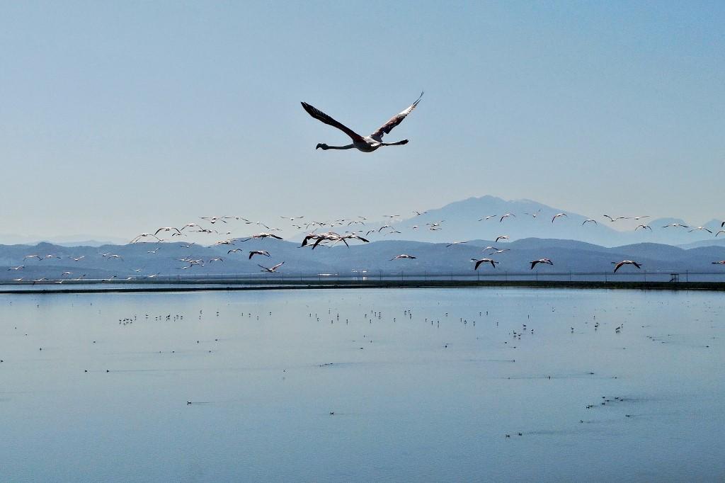 aves laguna de Narta Albania