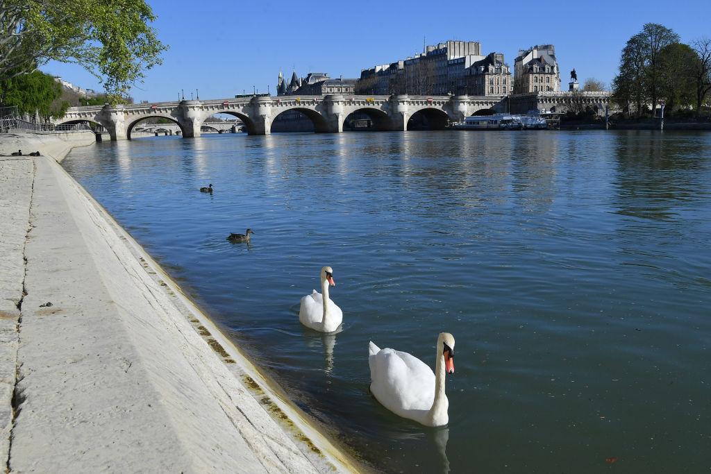 río Sena Cisne