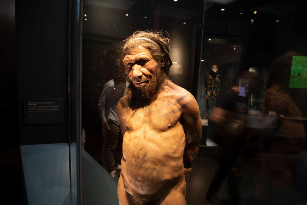 Neanderthal Neandertal neandertales museos Historia Natural de Londres