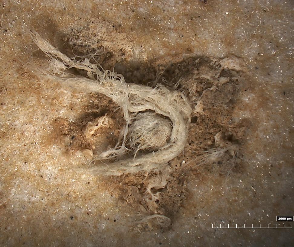 restos de la cuerda neandertales Francia