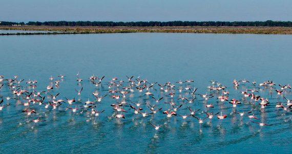 laguna de Narta Albania flamencos