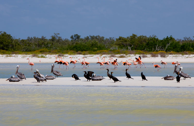 aves Holbox Flamencos