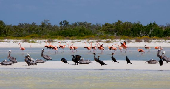 animales aves Holbox