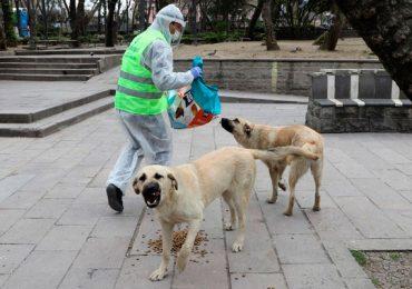 perros callejeros Turquía animales pandemia