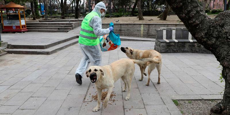 Gatos y perros callejeros, los olvidados en esta pandemia ...