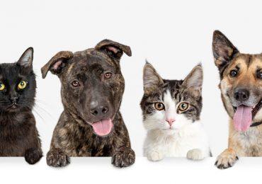 perros gatos China