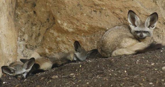Zoológico de San Antonio animales niños línea