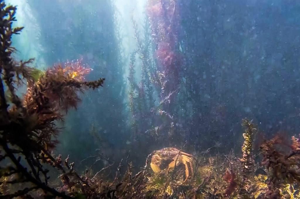 cangrejo Venecia Italia canales canal fauna