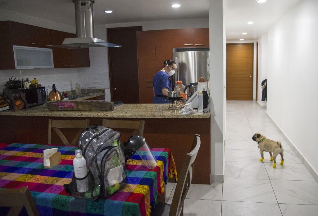 Lucia Ledesma perro coronavirus pug
