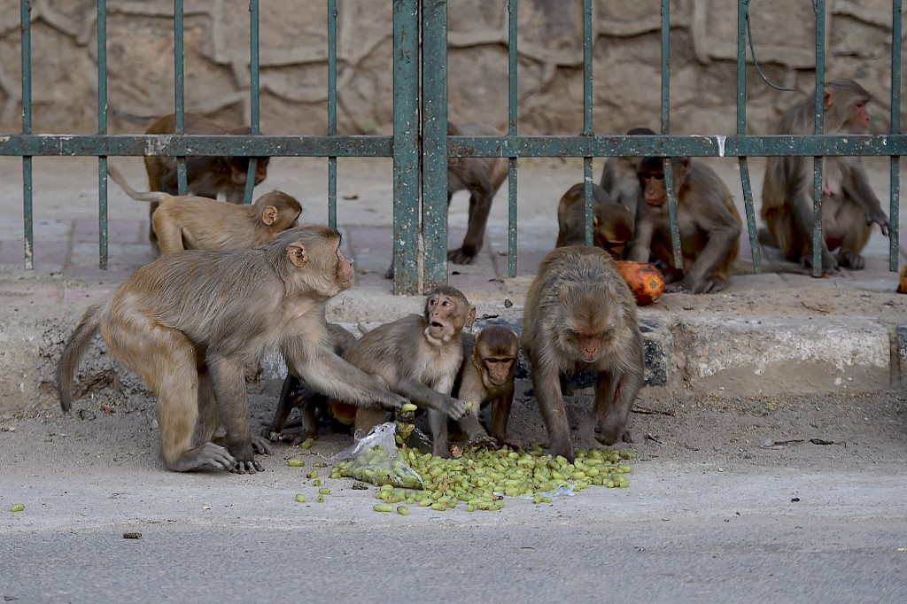 nuevo brote de coronavirus monos muestras