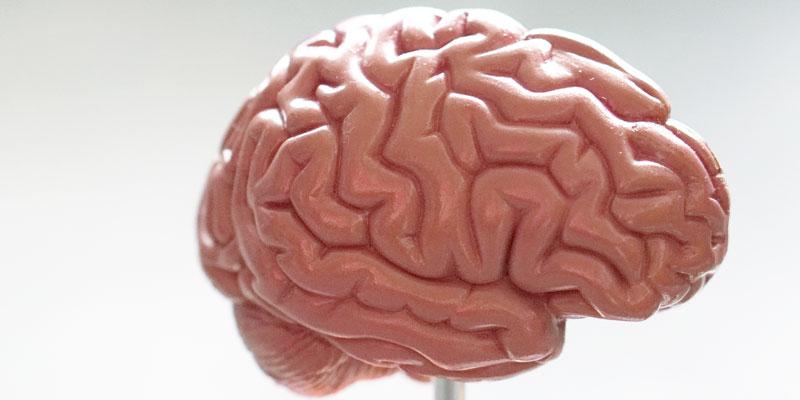 actividad física habilidades cognitivas cerebro