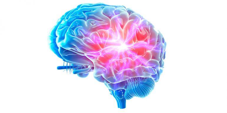 estrés cerebro hipocampo hipotálamo cerebro conexiones neuronales
