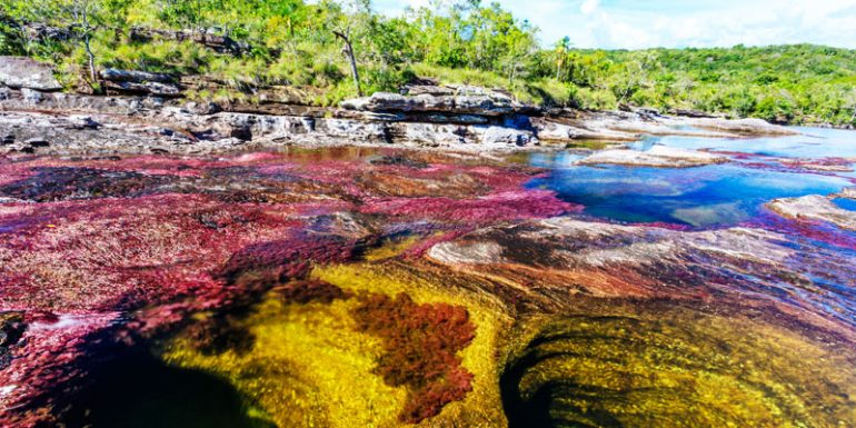 Caño Cristales río más hermoso del mundo Colombia