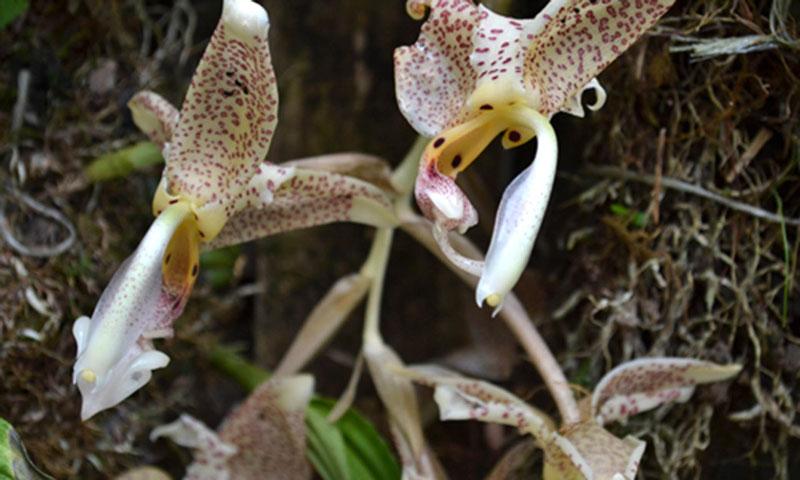 orquídeas UNAM COVID-19 biodiversidad plantas