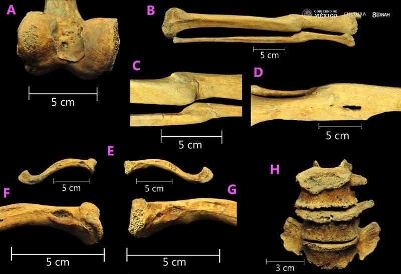 esclavos primera generación América México huesos